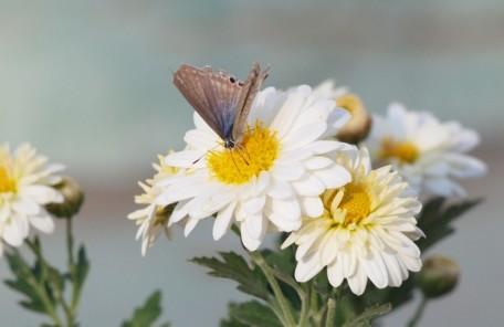 愛知、岐阜、三重、名古屋女性専門結婚相談所ブライダルサロンZERO蝶々